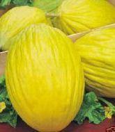 Meloni calabresi